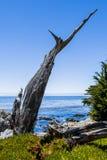 Pescadero-Punkt bei einem 17 Meilen-Antrieb in Big Sur Kalifornien Stockbild
