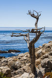 Pescadero punkt på 17 mil drev i stora Sur Kalifornien Royaltyfri Bild