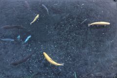 Pescado Fotos de archivo