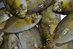 Pescado Foto de archivo