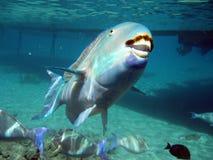 Pescado Foto de archivo libre de regalías