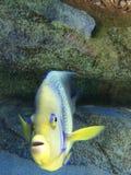 Pescado fotografía de archivo