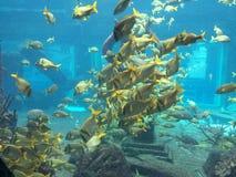 Pescado Imagenes de archivo