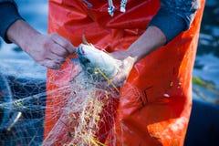 pescador ao limpar a rede de pesca dos peixes Imagem de Stock Royalty Free