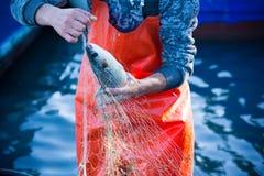 pescador ao limpar a rede de pesca dos peixes Imagens de Stock Royalty Free