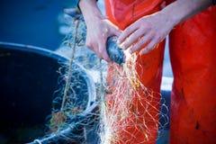 pescador ao limpar a rede de pesca dos peixes Foto de Stock