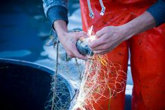 pescador ao limpar a rede de pesca dos peixes Imagens de Stock