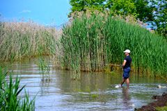 Pescador cercado por juncos foto de stock royalty free