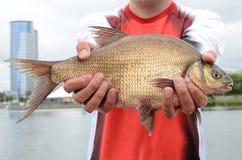 Pescador com peixes imagens de stock