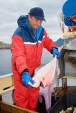 Pescador con el hallibut Fotos de archivo