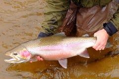 Pescador da mosca que prende um peixe muito grande Fotografia de Stock