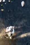 Pescador da mosca que usa a haste flyfishing Imagem de Stock