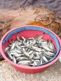 Pescador diario de la captura Fotos de archivo