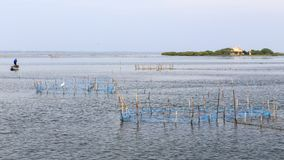 Pescador do camarão perto da ilha Jaffna - Sri Lanka de Kuruchadditivu fotografia de stock royalty free