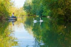 Pescador e cisnes de Amiens França em um canal Imagem de Stock Royalty Free