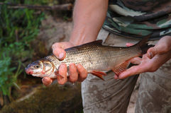 Pescador e peixes imagem de stock royalty free