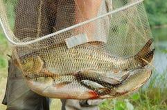 Pescador e um peixe imagens de stock