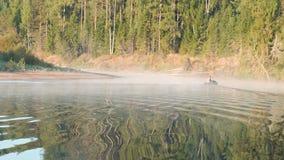 Pescador em nadadas infláveis de um barco de motor ao banco de rio Floresta do outono no fundo video estoque