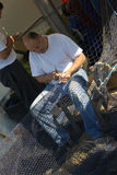 Pescador em Zadar fotos de stock royalty free