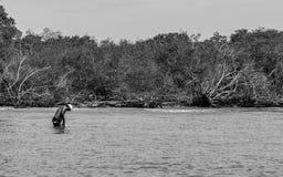 Pescador en el trabajo Imagen de archivo