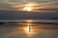 Pescador en puesta del sol Imagen de archivo libre de regalías