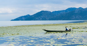 Pescador no barco, lago Skadar, Montenegro imagens de stock