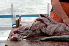 Pescador que limpa peixes azuis Fotografia de Stock