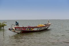 Pescador que prepara sua canoa no porto da cidade de Cacheu, em Guiné-Bissau Fotografia de Stock Royalty Free