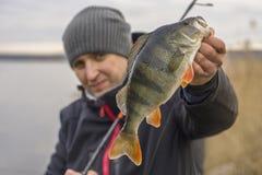 Pescador que sostiene el trofeo grande de los pescados de la perca a disposición imágenes de archivo libres de regalías