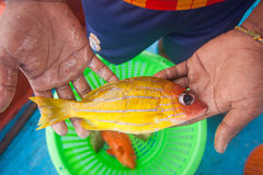 Pescador que sostiene pescados amarillos a mano en el barco de pesca Imagenes de archivo