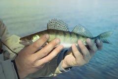 Pescador que sostiene pescados contra el agua de río azul Foto del primer imagen de archivo libre de regalías