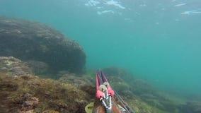 Pescador subacu?tico de la lanza con el arma que explora las aguas Spearfishing en el mar/el ocea metrajes