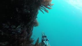 Pescador subacu?tico de la lanza con el arma que explora las aguas Spearfishing en el mar almacen de metraje de vídeo