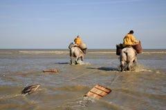 Pescadores del camarón a caballo, Oostduinkerke, Bélgica foto de archivo libre de regalías