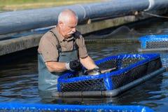 Pescadores en la acción al recoger pescados en el fishfarm Foto de archivo