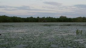 Pescadores que verificam redes no alvorecer no delta de Danúbio video estoque