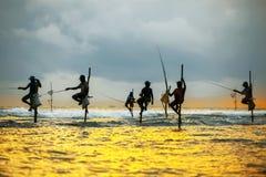 Pescadores tradicionales en los palillos en la puesta del sol en Sri Lanka Fotos de archivo libres de regalías