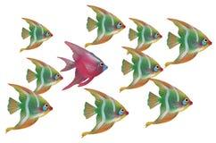 Pescados únicos imagenes de archivo