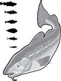 Pescados Imágenes de archivo libres de regalías