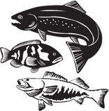 Pescados Imagen de archivo