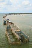 Pescados Foto de archivo