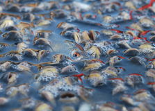 Pescados Fotos de archivo libres de regalías