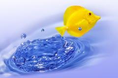 Pescados amarillos del sabor Imagenes de archivo