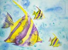 Pescados amarillos y púrpuras de la fantasía Fotos de archivo