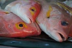 Pescados anaranjados fotos de archivo