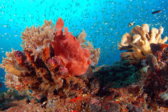 Pescados anaranjados de la rana imágenes de archivo libres de regalías