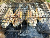 Pescados asados a la parrilla, brema de mar, dorada en la parrilla imagen de archivo libre de regalías