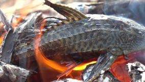 Pescados asados a la parrilla en el fuego metrajes