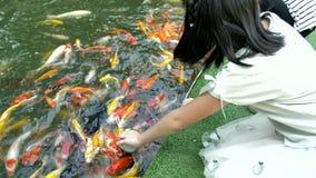 Pescados asiáticos de la alimentación infantil en una charca del jardín La carpa Koi de la alimentación de los niños pesca de los almacen de metraje de vídeo
