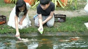 Pescados asiáticos de la alimentación infantil en una charca del jardín La carpa Koi de la alimentación de los niños pesca de los almacen de video